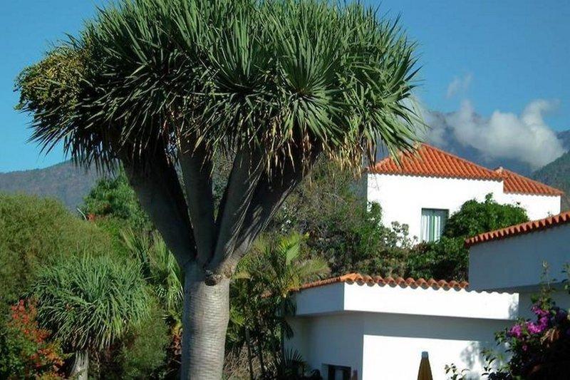 Bungalows La Plantacion in Los Llanos de Aridane, La Palma A