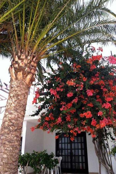 Los Tulipanes in Puerto del Carmen, Lanzarote TE